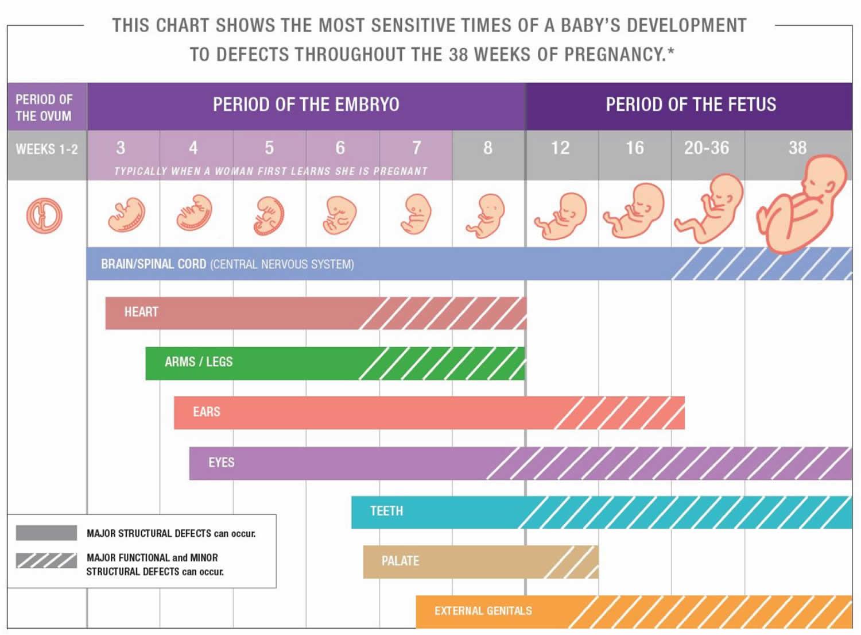 Critical periods of fetal development
