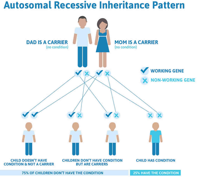 Morquio syndrome autosomal recessive inheritance pattern