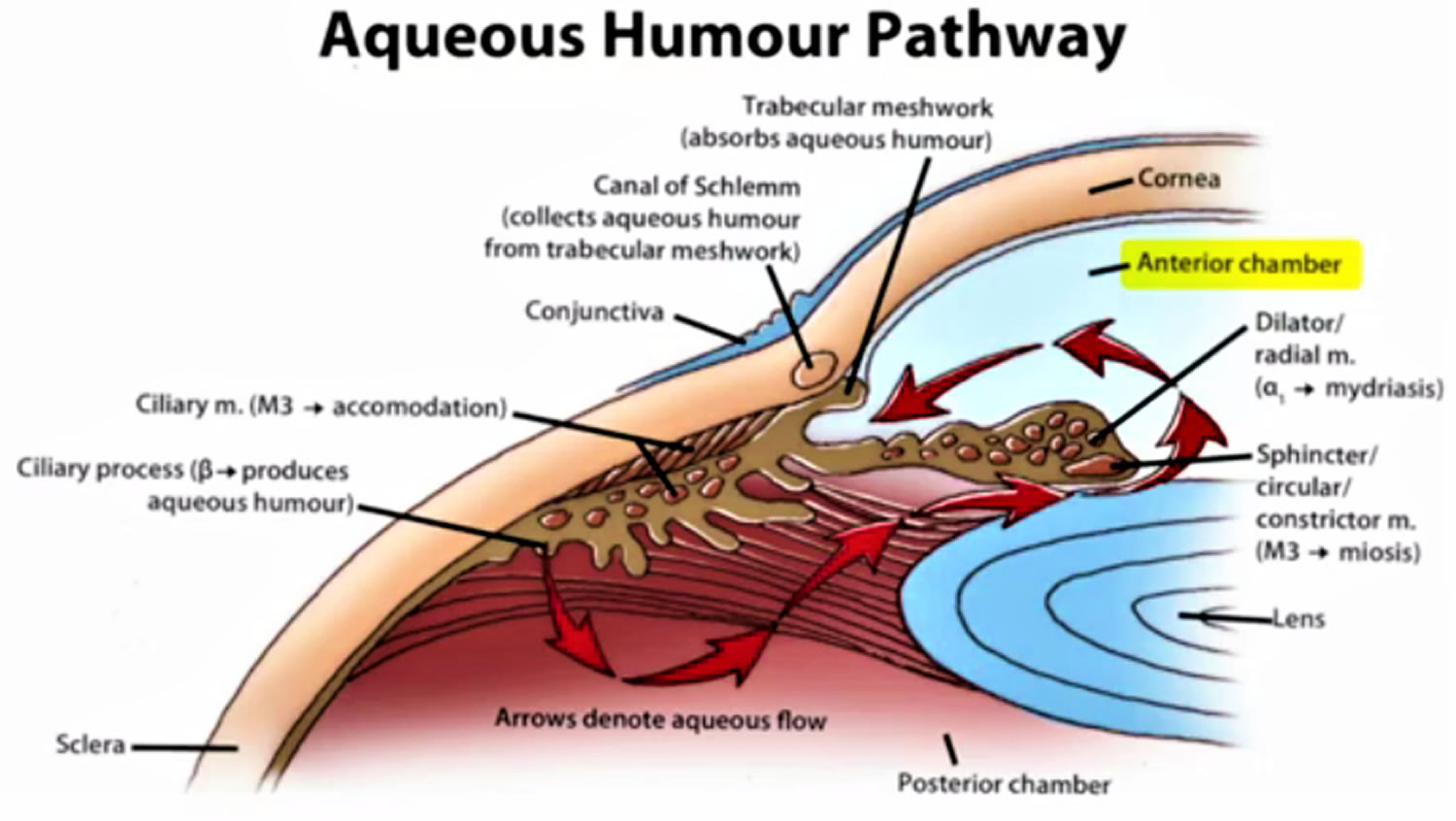 Normal aqueous outflow